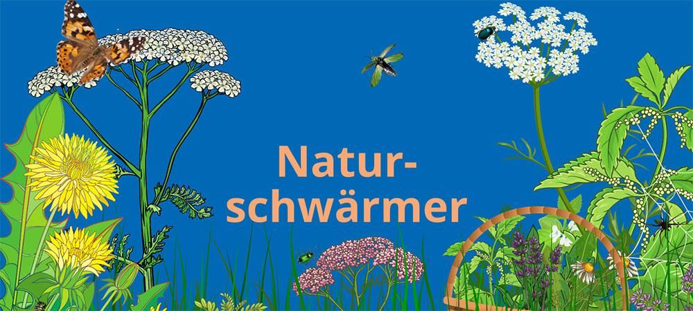 Illustrationen zum Thema Wildkräuter: Löwenzahn, Schafgarbe, Schmetterling, Korb