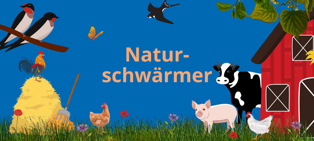Illustrationen zum Thema Landwirtschaft: Bauernhof, Schwalben, Kuh, Schwein, Hahn auf einem Misthaufen